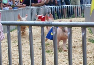 Hedrick's Racing Pigs (or rather, piglets)