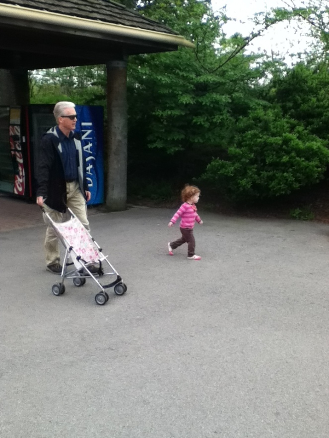 Miss M, who thinks she's 6, decided to leave Grandpa with the stroller and set off like the big kids.
